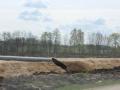 budowa Drogi S3 Lubin - Legnica (37)