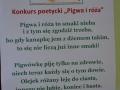 Gogołowice_pigwa_i_róża38
