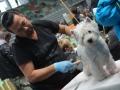 wystawa psów w Lubinie (12)