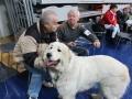 wystawa psów w Lubinie (13)