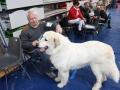 wystawa psów w Lubinie (14)