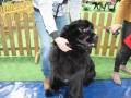 wystawa psów w Lubinie (15)