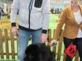 wystawa psów w Lubinie (16)