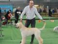wystawa psów w Lubinie (17)
