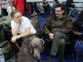 wystawa psów w Lubinie (19)