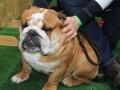 wystawa psów w Lubinie (2)