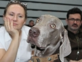 wystawa psów w Lubinie (21)