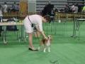wystawa psów w Lubinie (23)