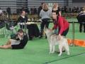 wystawa psów w Lubinie (24)