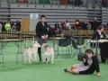 wystawa psów w Lubinie (25)