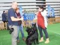 wystawa psów w Lubinie (26)