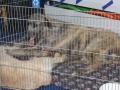 wystawa psów w Lubinie (34)