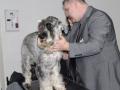 wystawa psów w Lubinie (37)
