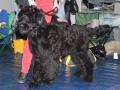 wystawa psów w Lubinie (39)