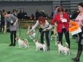wystawa psów w Lubinie (9)