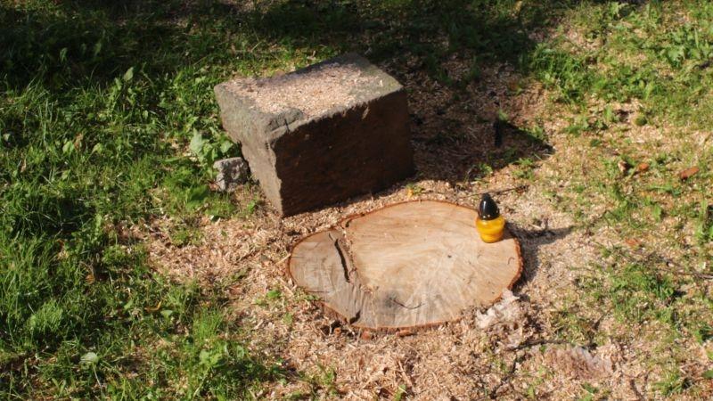 Wycięte drzewa przy Kopernika Lubin (10)