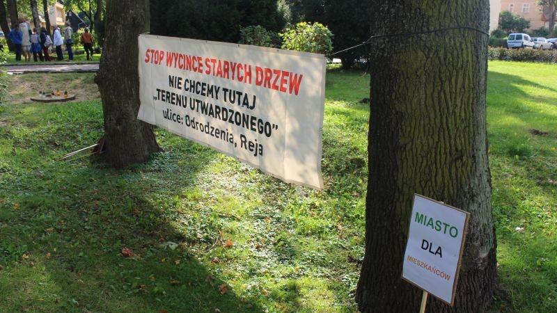 Wycięte drzewa przy Kopernika Lubin (12)