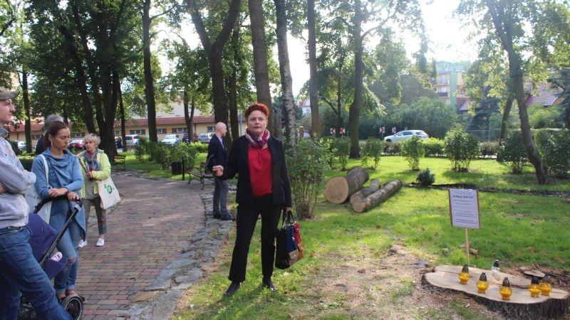 Wycięte drzewa przy Kopernika Lubin (13)