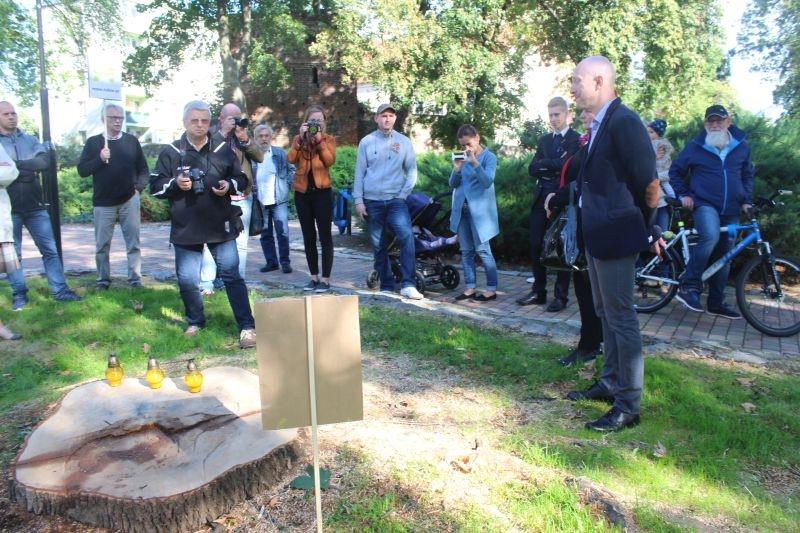 Wycięte drzewa przy Kopernika Lubin (3)