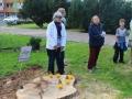 Wycięte drzewa przy Kopernika Lubin (15)