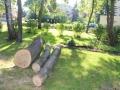 Wycięte drzewa przy Kopernika Lubin (2)