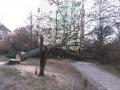 Reja wycinka drzew (1)