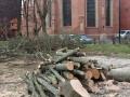 Reja wycinka drzew (10)