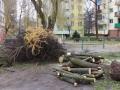 Reja wycinka drzew (12)