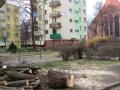 Reja wycinka drzew (13)
