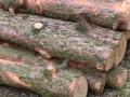Reja wycinka drzew (14)