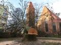 Reja wycinka drzew (2)