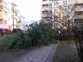 Reja wycinka drzew (5)