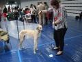 międzynarodowa wystawa psów (11)