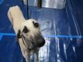 międzynarodowa wystawa psów (12)