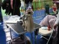 międzynarodowa wystawa psów (13)