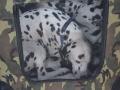 międzynarodowa wystawa psów (16)