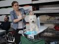 międzynarodowa wystawa psów (19)