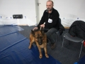 międzynarodowa wystawa psów (21)