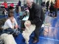 międzynarodowa wystawa psów (29)