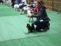 międzynarodowa wystawa psów (31)