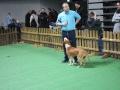 międzynarodowa wystawa psów (33)