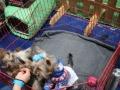 międzynarodowa wystawa psów (10)