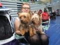 międzynarodowa wystawa psów (22)