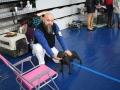 międzynarodowa wystawa psów (23)