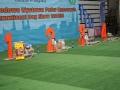 międzynarodowa wystawa psów (28)
