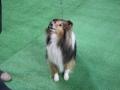 międzynarodowa wystawa psów (34)
