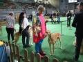 międzynarodowa wystawa psów (37)