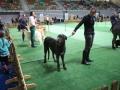 międzynarodowa wystawa psów (38)