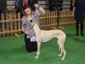 międzynarodowa wystawa psów (4)