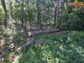 drzewo na drodze 01